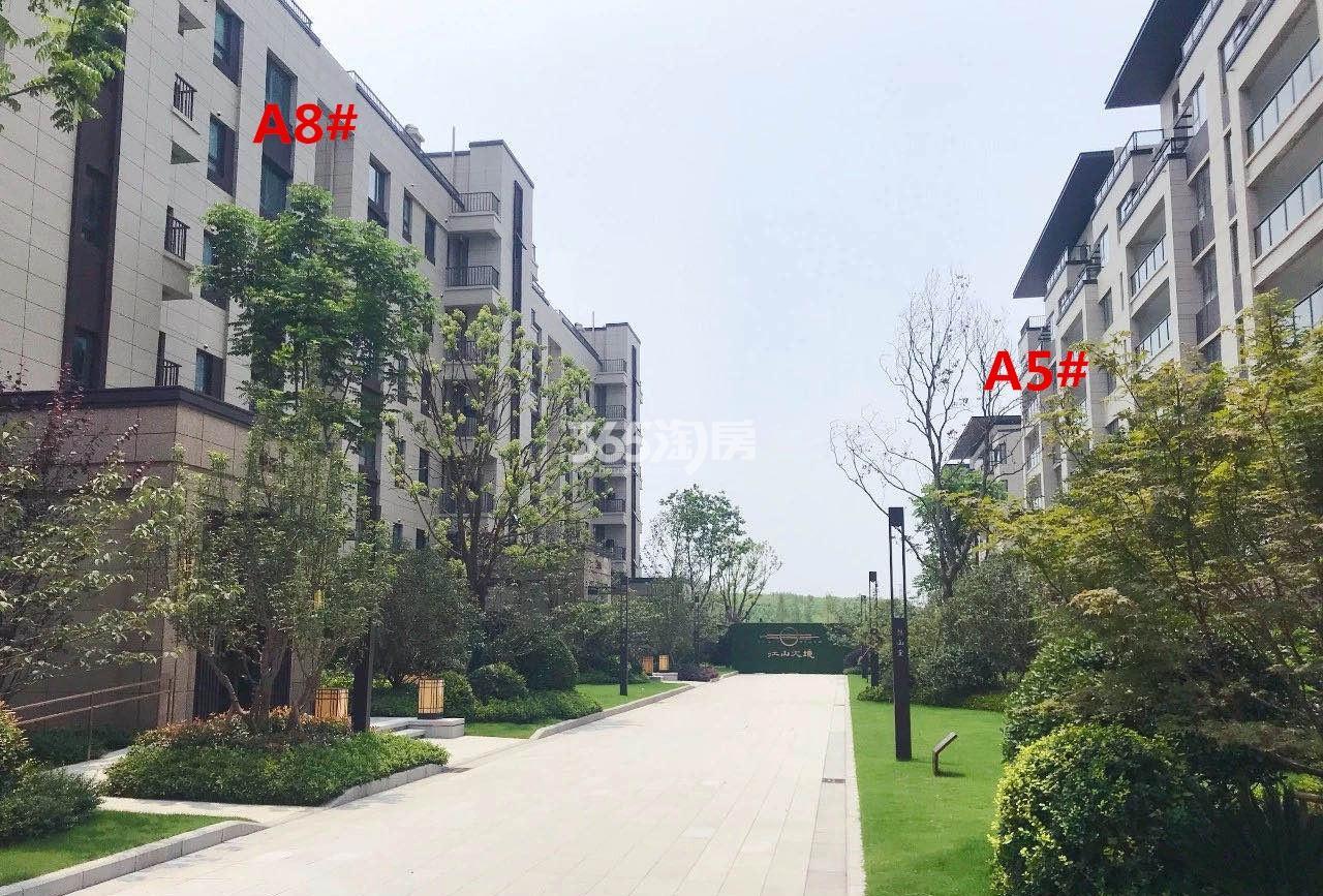 江山大境A地块5、8号楼实景图(11.28)