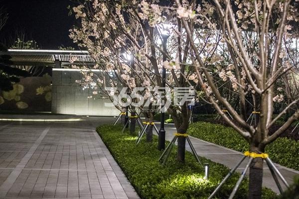 绿城凤起和鸣生活体验中心示范区实景图(2017.11摄)