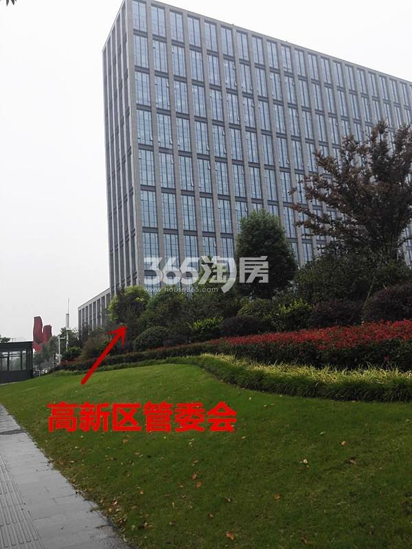 珍宝岛熙悦府一路之隔的高新区管委会实景图(10.17)
