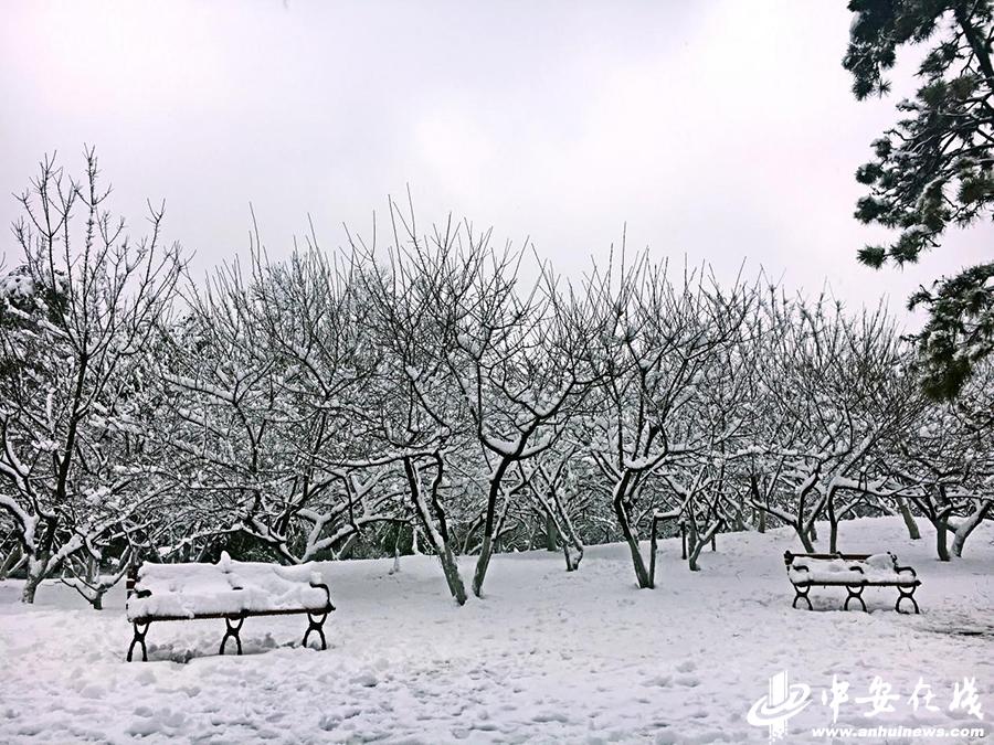 电子游戏大全下载:合肥迎2018第一场雪_全城银装素裹