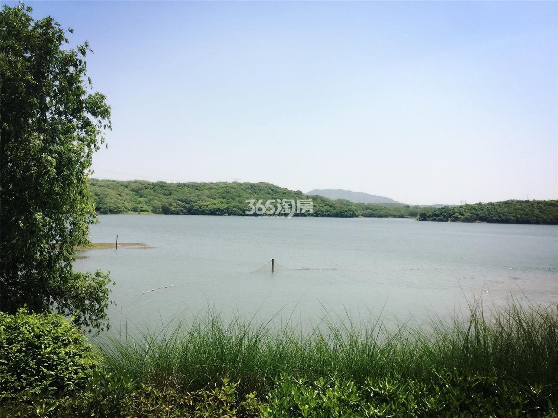 瑞安翠湖山小区湖景(10.21)