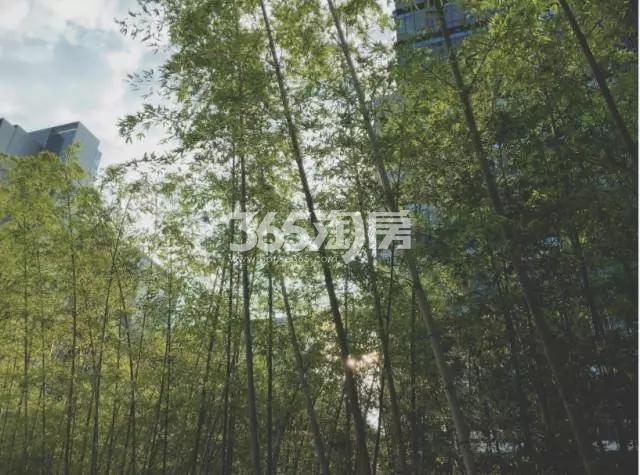 涵碧楼竹子实景图(4.25)